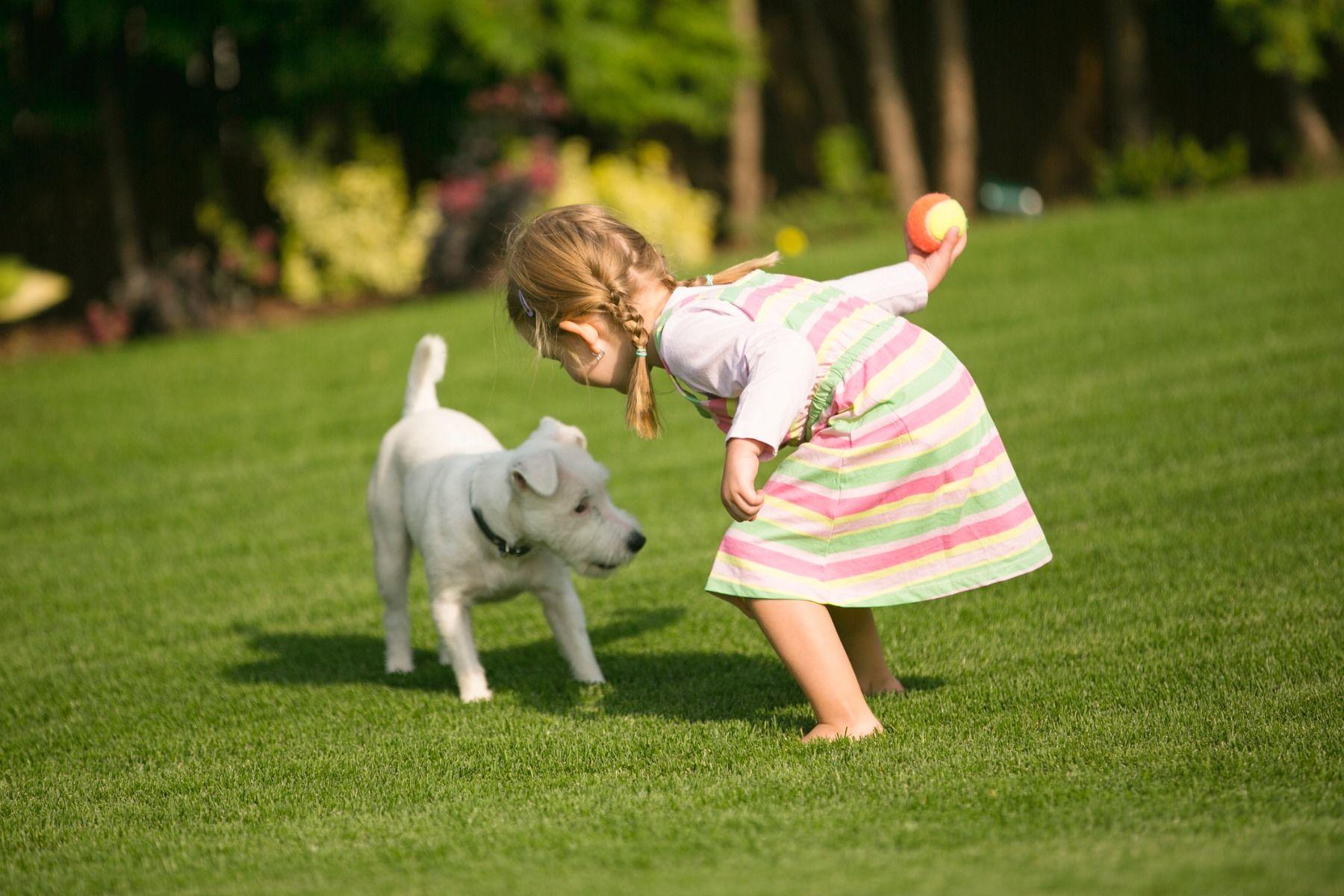 Kunstrasen und Hund